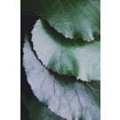 Grüne Blätter 2
