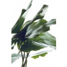 Grüne Blätter 3