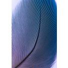 Blaue Feder im Detail