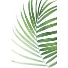 Palmenblatt 1